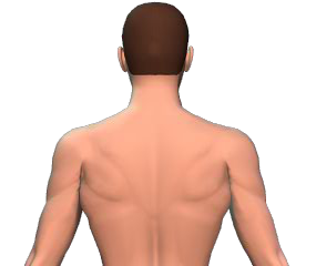 contralateral rotation of the vertebral column animation slide 2