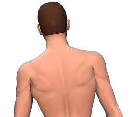 Lateral flexion of the vertebral column animation slide 5