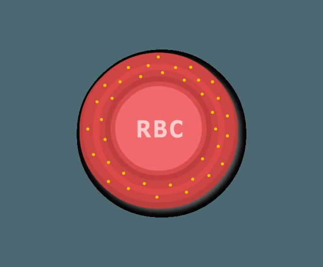 Rh antigen surface marker molecules on a red blood cell.