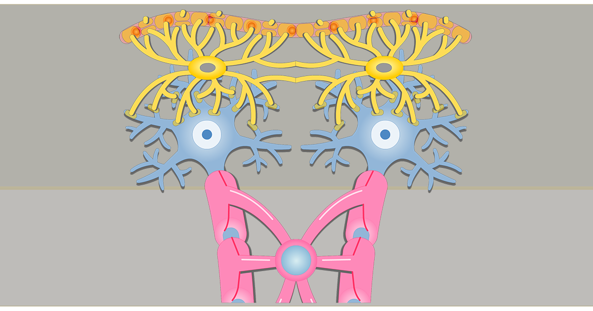Astrocytes - Location, Structure, and Function