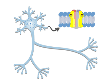 Dendrites - Structure and Functions - Featured