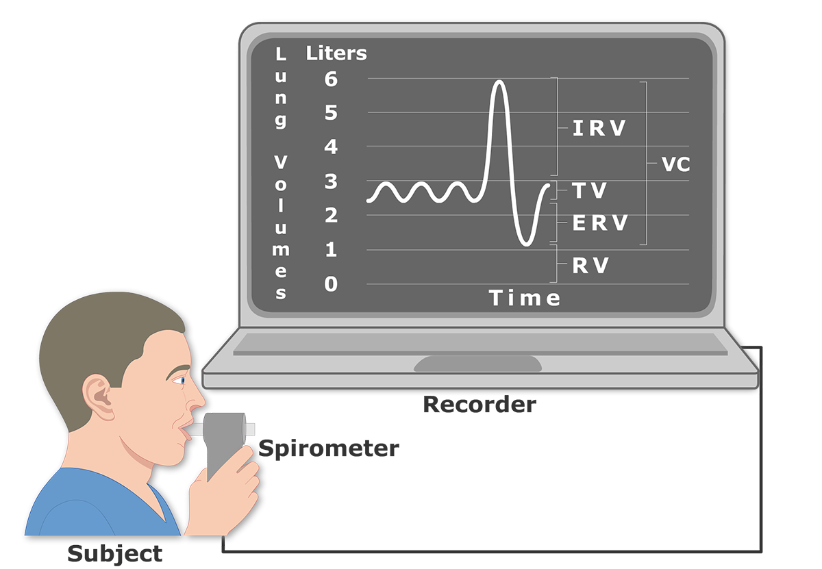 The featured image for the Lung Volumes and Capacities tutorial demonstrating the Vital Capacity