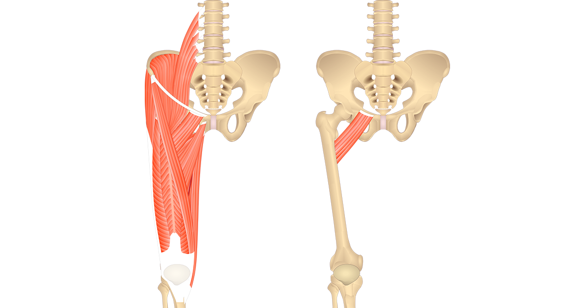 Image showing the anterior muscles of the thigh and isolated Pectineus muscle