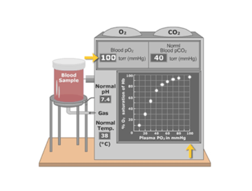 The concentration of oxygen in the blood plasma