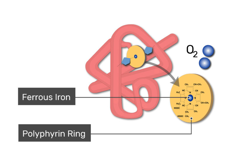 Binding to oxygen