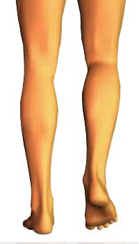 Leg flexion (2)