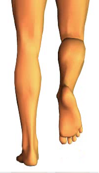 Leg flexion (5)