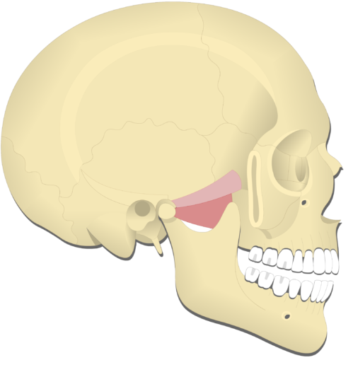 Mandible depression (1)