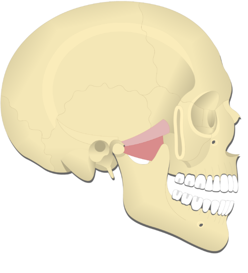 Mandible depression (2)