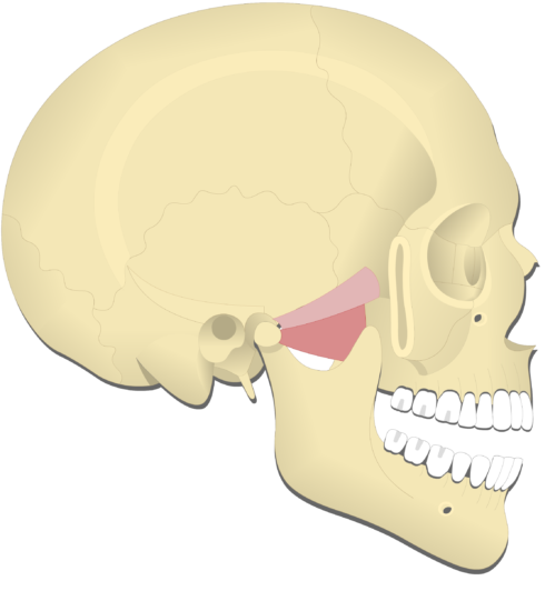 Mandible depression (3)