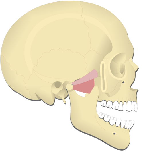 Mandible depression (4)