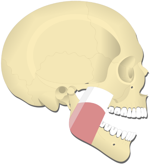 Mandible elevation (1)