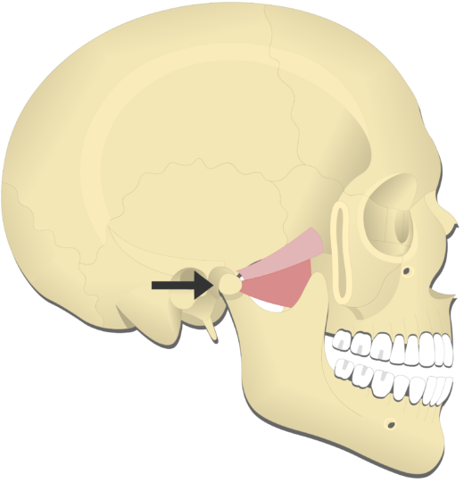 Mandible protraction (4)