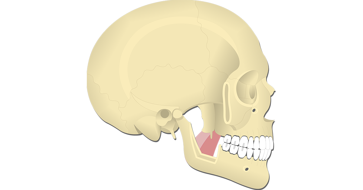 Medial Pterygoid Muscle - Attachments, Actions & Innervation
