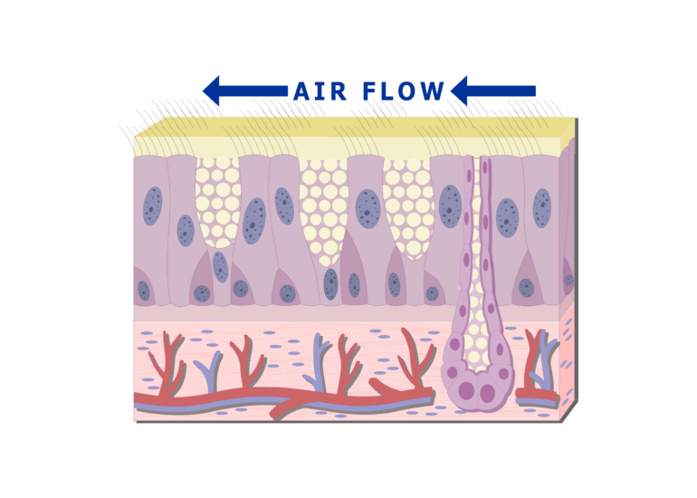 The air flow over the cilia
