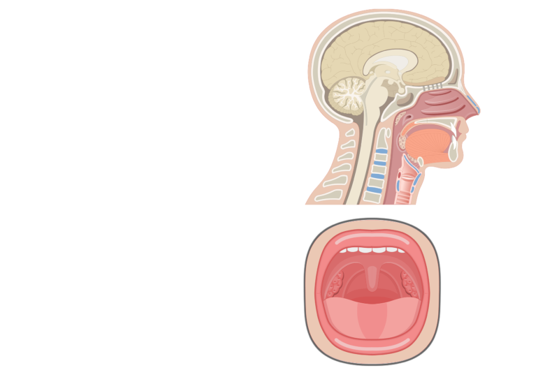 Oral view and sagittal view demonstrating the tonsils