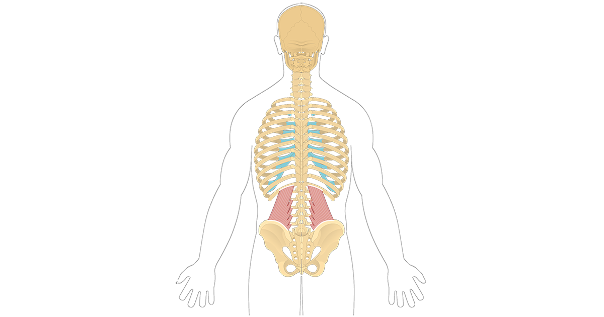 Quadratus Lumborum Origin And Insertion