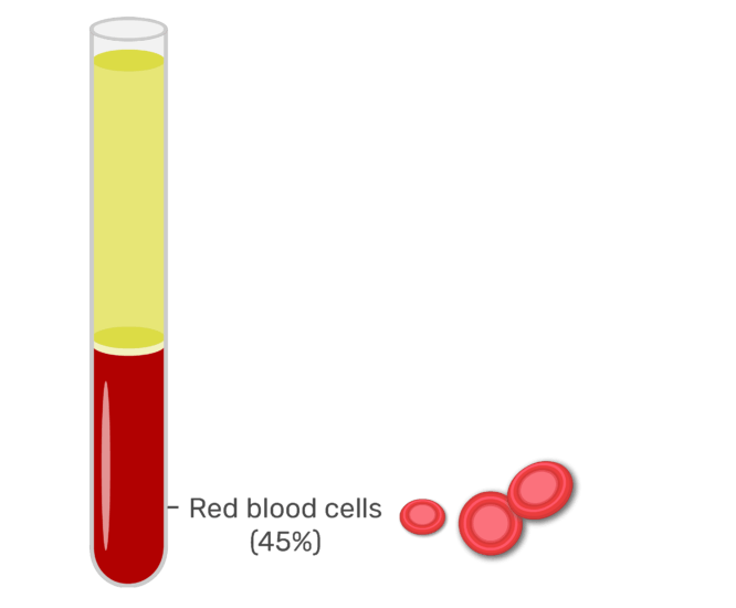 Animation slide showing the 45% or red blood cells in whole blood.