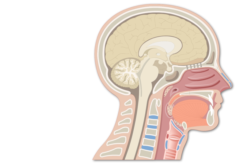 Sagittal view of the head and neck demonstrating pharynx anatomy