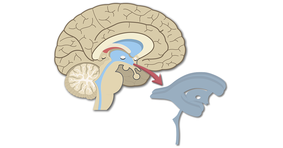 Ventricles of the Brain | Ventricular System