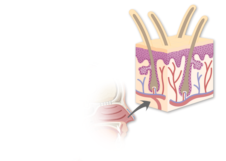 Midsagittal view of head and a zoom in of stratified squamous epithelium