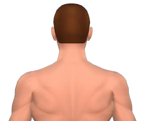 Lateral flexion of the head animation slide 1