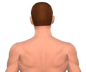 Lateral flexion of the head animation 2