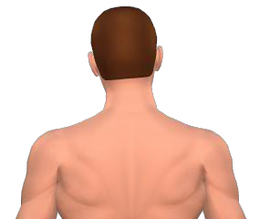 Lateral flexion of the head animation 3