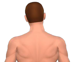 Lateral flexion of the head 4