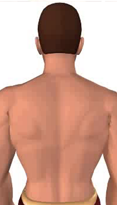 First image in animation of a neck bending laterally