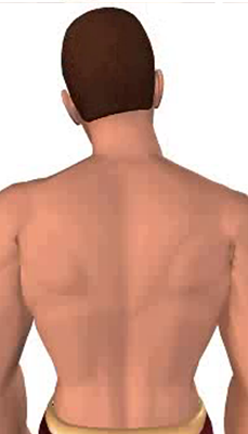 Fourth image in animation of a neck bending laterally