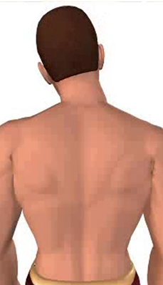 Fifth image in animation of a neck bending laterally