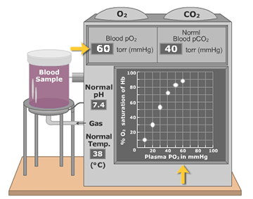 An animation demonstrating the concentration of oxygen in the blood plasma affects oxygen-hemoglobin (O2-Hb) saturation.