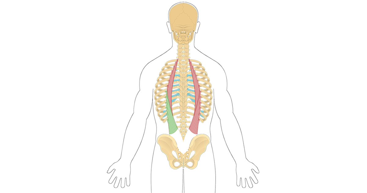 Iliocostalis Lumborum Featured Image