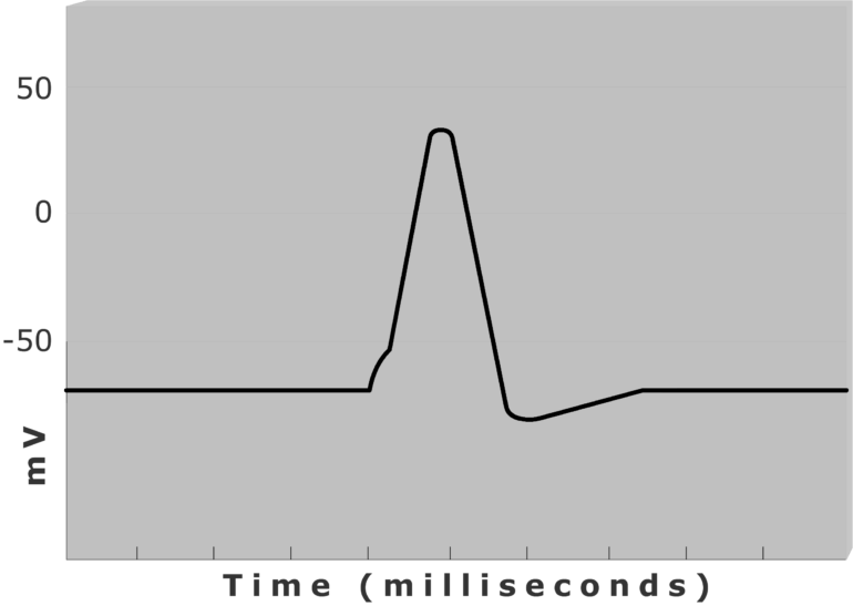 An image showing a diagram of action potential measured (mv) through time