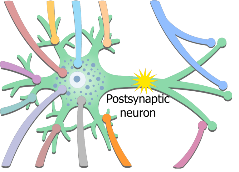 An image showing the exciting potential coming from presynaptic neurons then stimulating postsynaptic neuron generating new action potential in the postsynaptic neuron