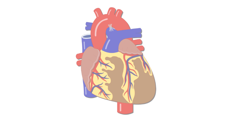 Coronary Veins | Cardiac Veins
