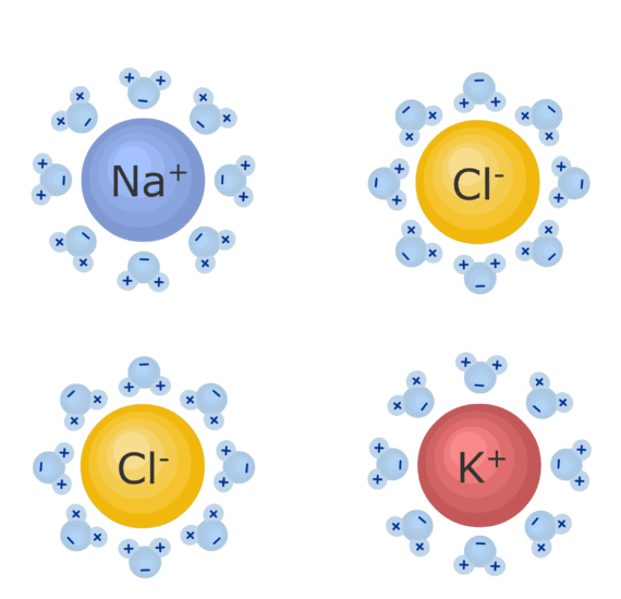 An image showing Na, Cl and K ions, the water ions around are being attracted
