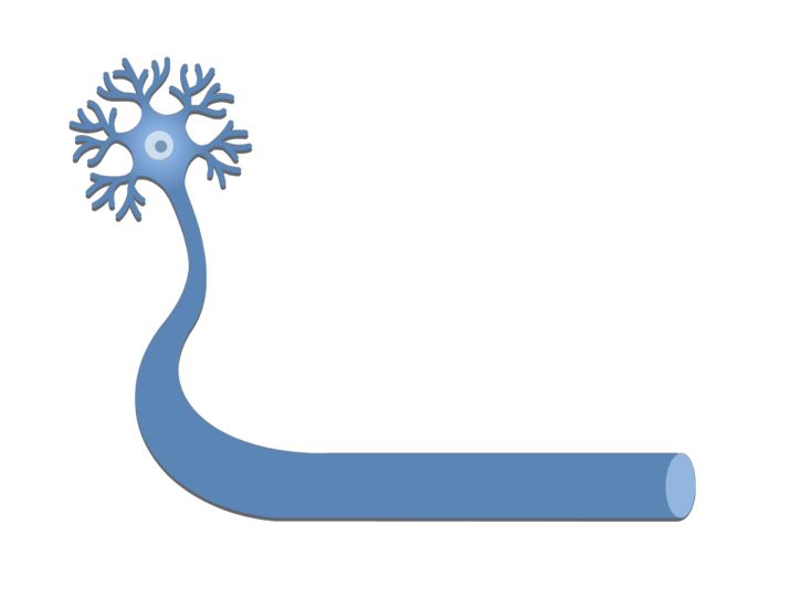 An image showing a neuron with it's axon