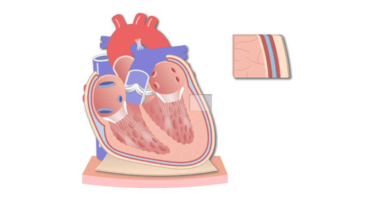 Coronal section of the pericardium animation slide 11