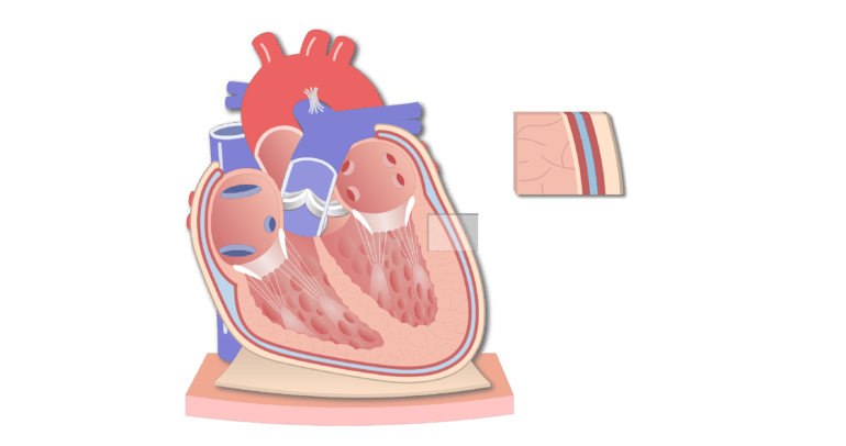 Coronal section of the pericardium animation slide 9