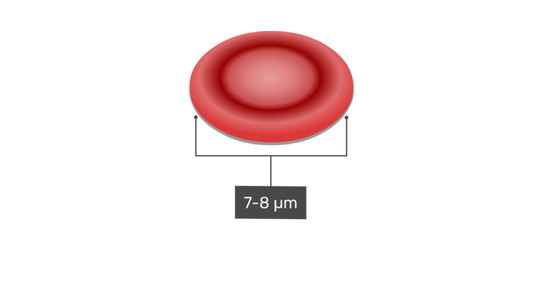 Diameter of a red blood cell