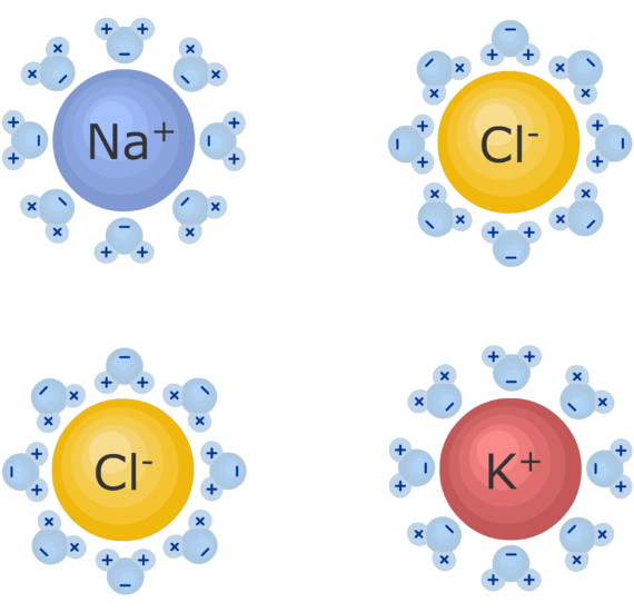 An image showing Na, Cl and K ions, they are being separated by water ions which allow the ions to remain dissolved