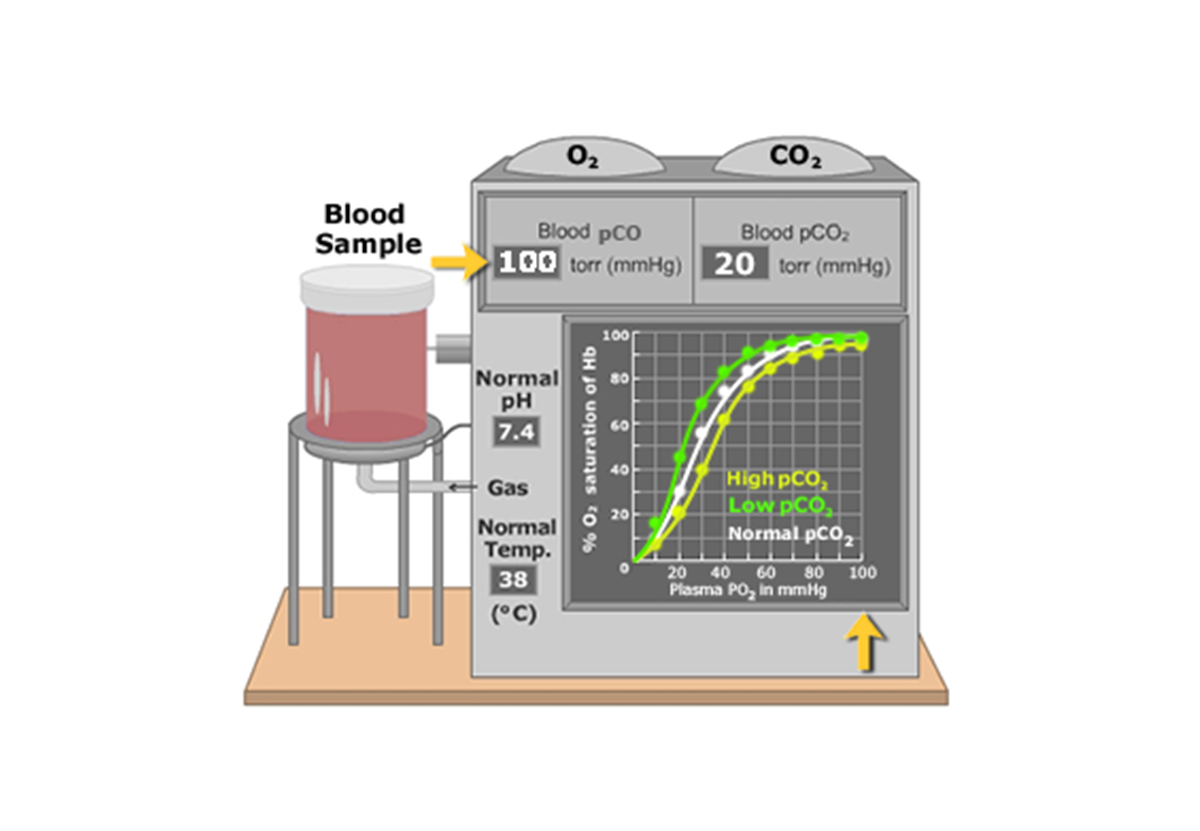 CO2 effect on Oxygen-Hemoglobin Dissociation Curve