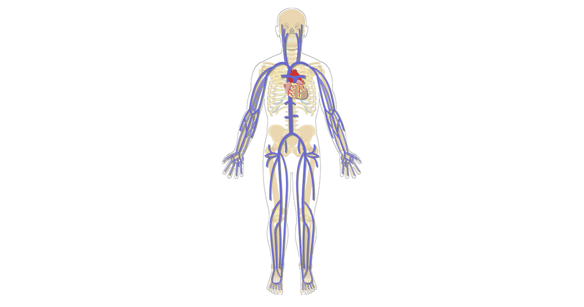 Featured image for the major systemic veins