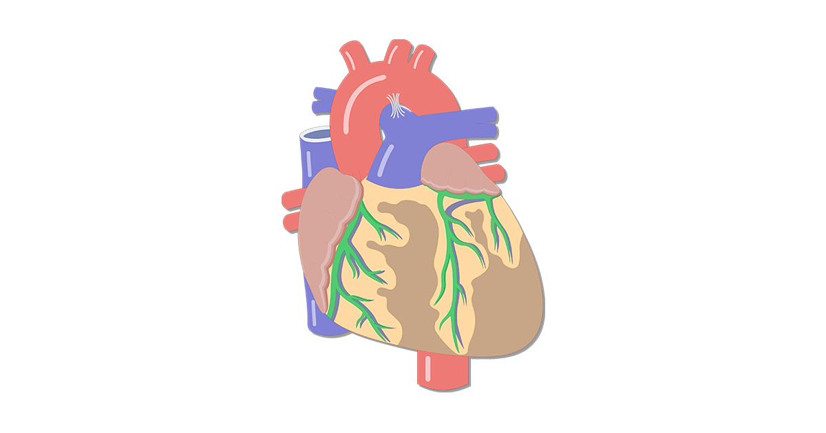 Featured image of the coronary arteries with the arteries highlighted in green.