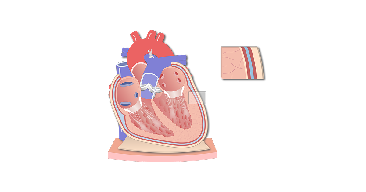 Featured image of the pericardium