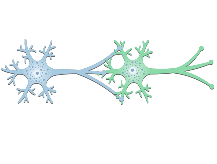 An image of a synapse between 2 neurons (presynaptic and postsynaptic neurons) showing the basic structures