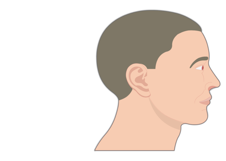 Nose and Nasal Cavity | Structure & Functions