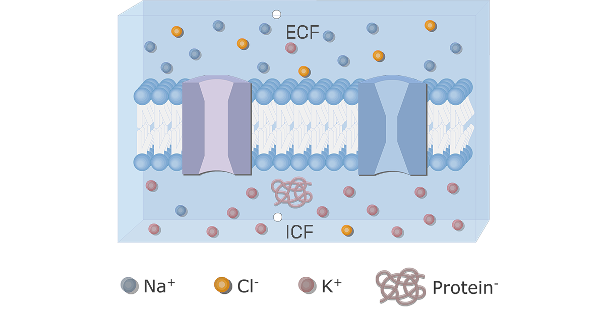 Ion Channel Proteins